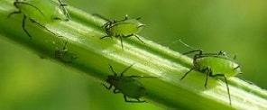 Действие инсектицидов.