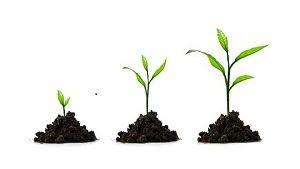 Влияние регуляторов роста растения.